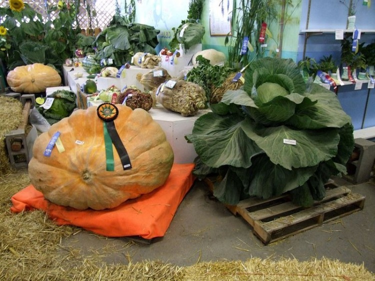 alaska-giant-vegetables-325255b625255d