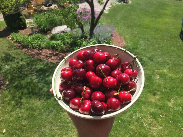 cherrybowl