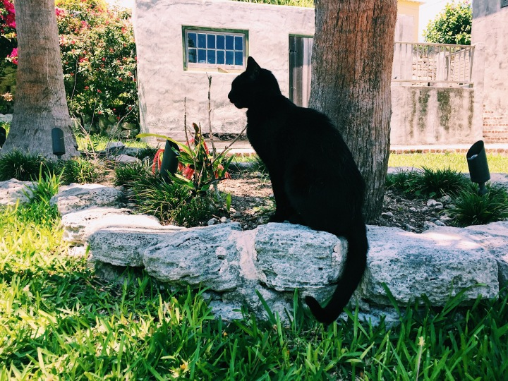 Cats of the World: St. George's, Bermuda