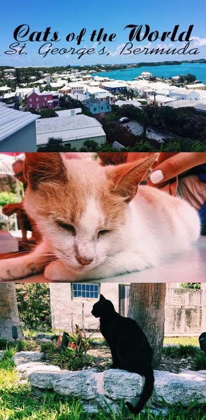 cats world bermuda
